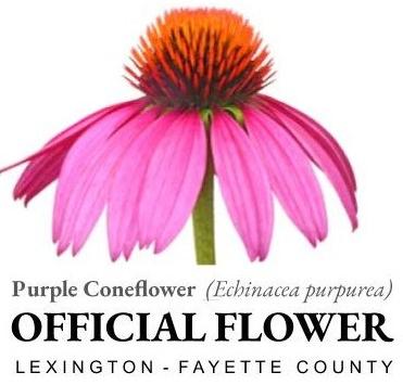 Official Flower Logo (1)